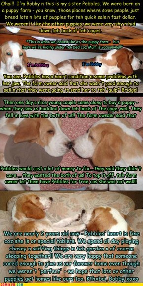 The Story of Bobby n Pebbles...