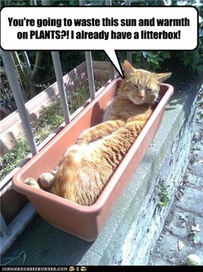 You're going to waste this sun and warmth on PLANTS?! I already have a litterbox!