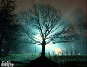 Spooky Tree WIN