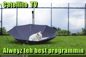 Catellite  TV    Alweyz teh best programmin