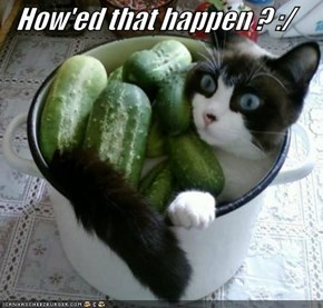 How'ed that happen ? :/