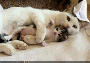 Cyoot Kittehs of teh Day: Mama Will Protekt Meh