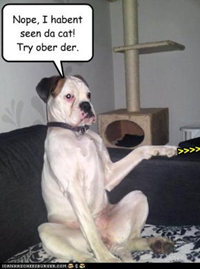 Nope, I habent seen da cat! Try ober der.