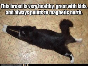This breed is very healthy, great with kids, and always points to magnetic north.