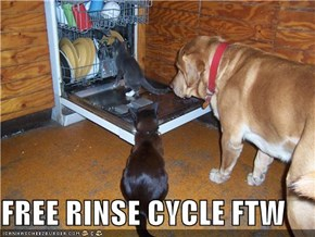 FREE RINSE CYCLE FTW
