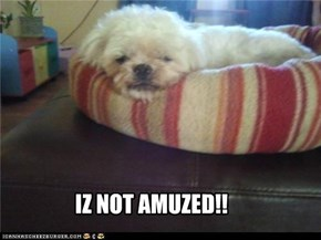 IZ NOT AMUZED!!