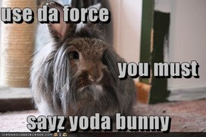 use da force you must sayz yoda bunny
