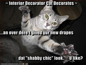 "~ Interior Decorator Cat Decorates ~ ...an over dere I gived yur new drapes dat ""shabby chic"" look.      U like?"