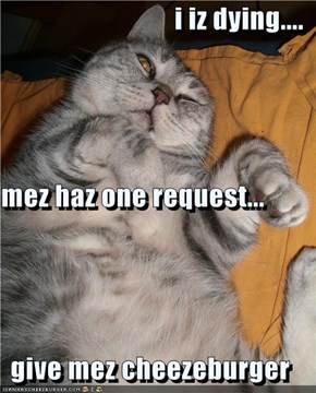 i iz dying.... mez haz one request... give mez cheezeburger