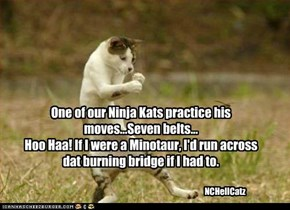 One of our Ninja Kats practice his moves...Seven belts...Hoo Haa! If I were a Minotaur, I'd run across dat burning bridge if I had to.