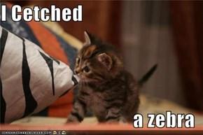 I Cetched   a zebra