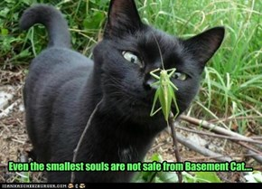 Even the smallest souls are not safe from Basement Cat....