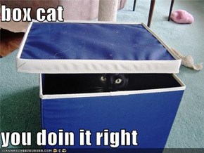 box cat   you doin it right