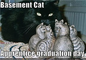 Basement Cat  Apprentice graduation day