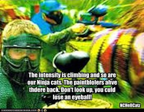 The intensity is climbing and so are our Ninja cats. The paintblolers ahve thdere back. Don't look up, you culd lose an eyeball!