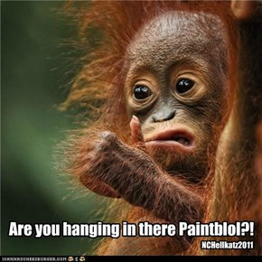Are you hanging in there Paintblol?!
