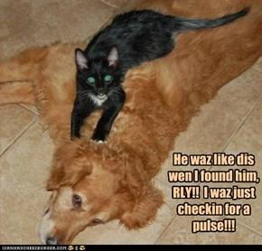 He waz like dis wen I found him, RLY!!  I waz just checkin for a pulse!!!