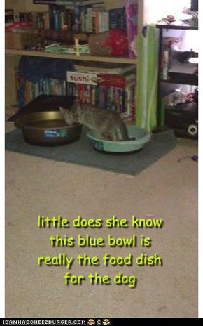 little does she know this blue bowl is really the food dish for the dog