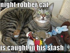 night robber cat  is caught in his stash