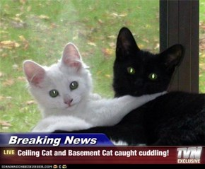 Breaking News - Ceiling Cat and Basement Cat caught cuddling!