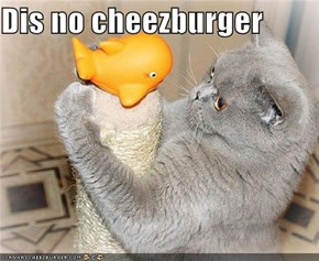 Dis no cheezburger