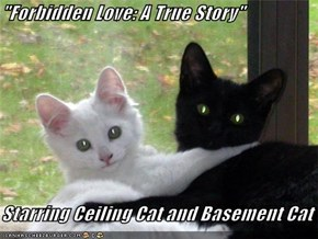 """Forbidden Love: A True Story""  Starring Ceiling Cat and Basement Cat"