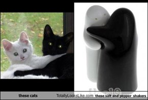 These Cats Totally Look Like These Salt & Pepper Shakers