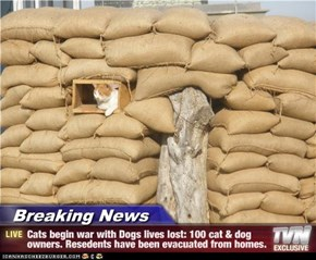 Breaking News - Cats begin war with Dogs lives lost: 100 cat & dog owners. Resedents have been evacuated from homes.