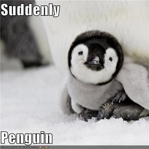 Suddenly  Penguin