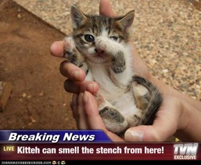 Breaking News - Kitteh can smell the stench from here!