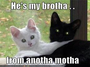 He's my brotha . .   from anotha motha
