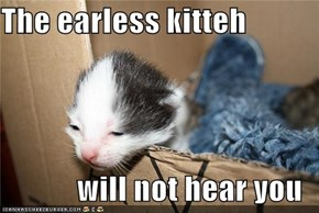 The earless kitteh  will not hear you