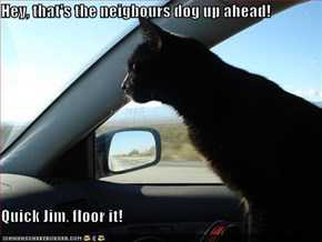 Hey, that's the neigbours dog up ahead!  Quick Jim, floor it!