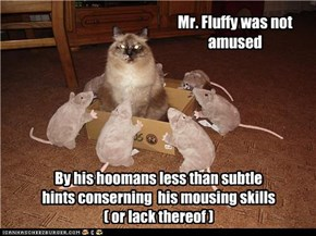 Mr. Fluffy was not amused
