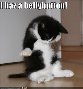 I haz a bellybutton!