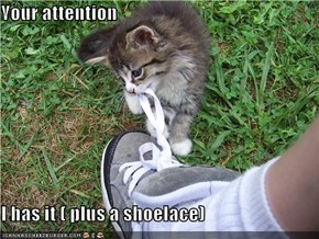 Your attention  I has it ( plus a shoelace)