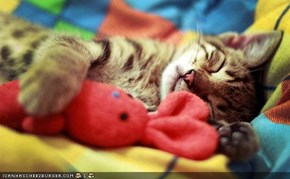 Cyoot Kitteh of teh Day: Saturday Sleep-In