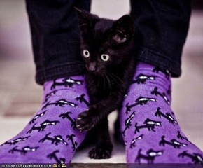 Cyoot Kitteh of teh Day: Your Obsession Is Just Getting Creepy...