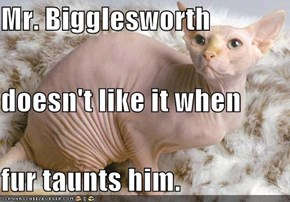 Mr. Bigglesworth doesn't like it when fur taunts him.