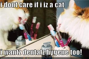 i dont care if i iz a cat  i wantz dentalz hygene too!
