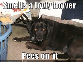 Smells a lovly flower