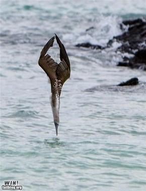 Mother Nature FTW: Dive Bomb!