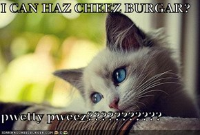 I CAN HAZ CHEEZ BURGAR?  pwetty pweez???????????