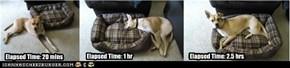 Zelda's First Bed