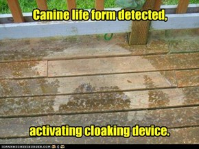 Canine life form detected,