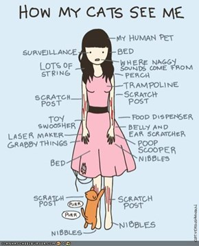 Kitteh Komic ob teh Day: How Cats See Humans