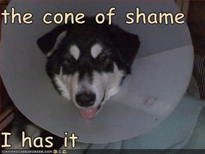 the cone of shame  I has it