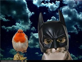 Holy Hovering Hippos - It's Batcat & Robin! (Feel free to caption everyone!)