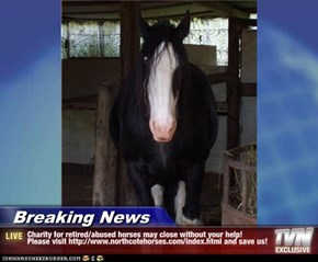 Breaking News - Charity for retired/abused horses may close without your help!  Please visit http://www.northcotehorses.com/index.html and save us!