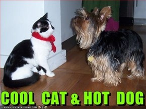 COOL  CAT & HOT  DOG